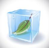 Cubetto di ghiaccio con la foglia Fotografia Stock