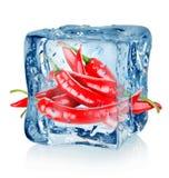 Cubetto di ghiaccio e peperoncini Fotografia Stock