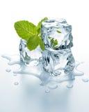Cubi di ghiaccio con la menta Fotografie Stock