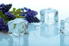 Cubi di ghiaccio e del Muscari Fotografia Stock