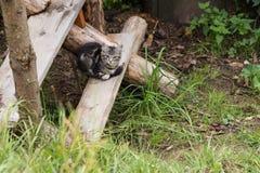 Cubi grigi del gatto sui punti di legno all'aperto Immagini Stock Libere da Diritti