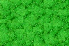 Cubi nerved verdi della foglia con il modello astratto Fondo astratto per botanica, biologia ed ecologia Orizzontale con lo spazi fotografia stock libera da diritti