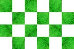 Cubi nerved verdi della foglia con il modello astratto su fondo bianco Fondo astratto per botanica, biologia ed ecologia orizzont fotografia stock