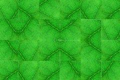 Cubi nerved verdi della foglia con il modello simmetrico astratto Fondo astratto per botanica, biologia ed ecologia Orizzontale c immagini stock libere da diritti