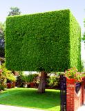 Cubic shaped tree Stock Photos