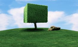 Cubic shaped tree Royalty Free Stock Photo