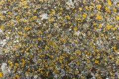 Cubierta colorida del liquen en la superficie de la piedra del granito imagen de archivo libre de regalías