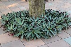 Cubierta con la hierba Foto de archivo libre de regalías
