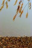 Cubierta con las hojas perdidas detrás del lago Imagen de archivo