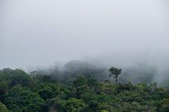 Cubierta de color verde oscuro de la montaña del bosque de la mañana con backgrou brumoso pesado de la niebla Imagenes de archivo