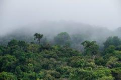 Cubierta de color verde oscuro de la montaña del bosque de la mañana con backgrou brumoso pesado de la niebla Imágenes de archivo libres de regalías