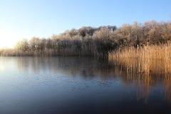 Cubierta de Frost en humedal en invierno Imagen de archivo libre de regalías