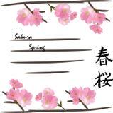 Cubierta de la primavera con las flores de cerezo Fotos de archivo libres de regalías