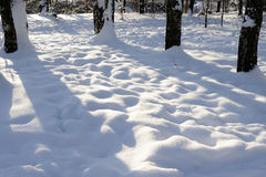 Cubierta de nieve hermosa en un bosque del invierno Imagen de archivo