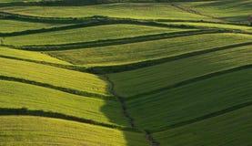 Cubierta de Rolling Hills de Lush Grass Fotografía de archivo