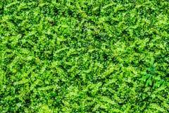 Cubierta de tierra Foto de archivo libre de regalías
