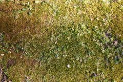 Cubierta de tierra cubierta de musgo Foto de archivo libre de regalías