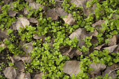 Cubierta de tierra verde con las hojas muertas Foto de archivo libre de regalías