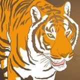 Cubierta del tigre Foto de archivo libre de regalías