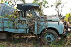 Cubierta oxidada del camión del viejo vintage en plantas Foto de archivo libre de regalías