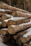 Cubiertas de madera debajo de la nieve Bosque colorido del invierno foto de archivo