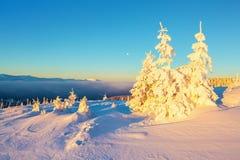 Cubierto con el soporte de la nieve pocos árboles en los copos de nieve mágicos Imagen de archivo