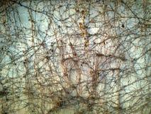 Cubierto con la pared marchitada de las enredaderas Fotos de archivo