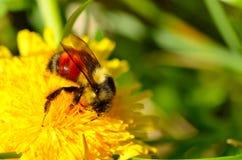 Cubierto en polen Foto de archivo