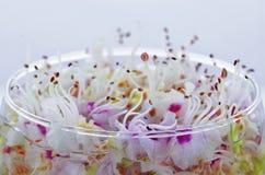 Cubilete con las flores Fotografía de archivo