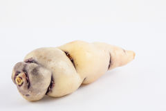Cubio Tropaeolum tuberosum isolated Stock Image