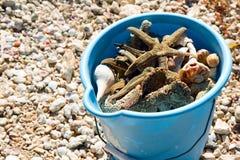 Cubo azul de la playa por completo de cáscaras foto de archivo libre de regalías