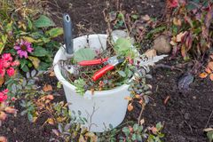 Cubo con los utensilios de jardinería y la basura del jardín Fotos de archivo