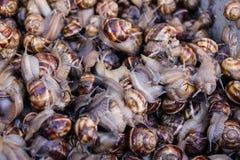 Cubo de caracoles en mercado Imágenes de archivo libres de regalías