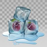 Cubo de gelo com ameixa Fotografia de Stock Royalty Free