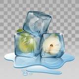 Cubo de gelo com pera Imagem de Stock