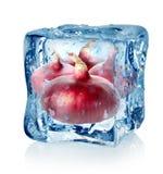 Cubo de hielo y cebolla roja Imagenes de archivo