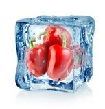 Cubo de hielo y pimientas rojas Fotos de archivo