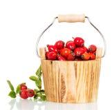 Cubo de madera con la rosa salvaje de las bayas frescas aislada en blanco Fotografía de archivo libre de regalías