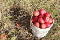 Cubo de manzanas en hierba Imagenes de archivo