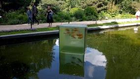 Cubo del pesce in stagno stock footage