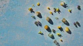 Cubo do gelo com o dente-de-leão amarelo congelado e o amarelo e o azul fotos de stock royalty free