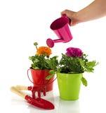 Cubo rojo y verde con las flores de la primavera Fotos de archivo libres de regalías