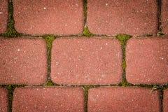 Cubo rosso della pavimentazione con muschio Fotografia Stock Libera da Diritti