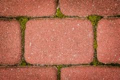 Cubo rosso della pavimentazione con muschio Immagine Stock