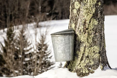 Cubo tradicional de la savia en árbol de arce en Vermont Fotografía de archivo libre de regalías