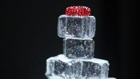 Cubos de gelo no bar vídeos de arquivo