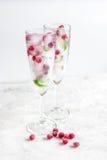 Cubos de hielo con las bayas y la menta rojas en vidrios en el fondo blanco Fotografía de archivo libre de regalías