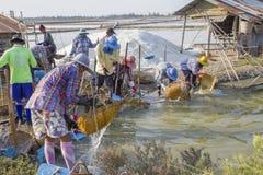 Cubos de la sal del granjero de la sal del mar que se lavan Fotografía de archivo libre de regalías