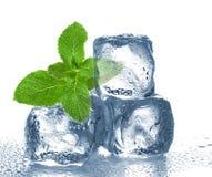 Cubos e hortelã de gelo Imagens de Stock Royalty Free