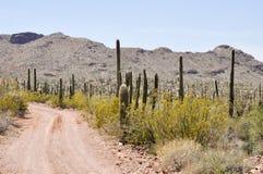 Cubra con grava el camino, parque nacional del cactus del tubo de órgano, Arizona Fotos de archivo libres de regalías